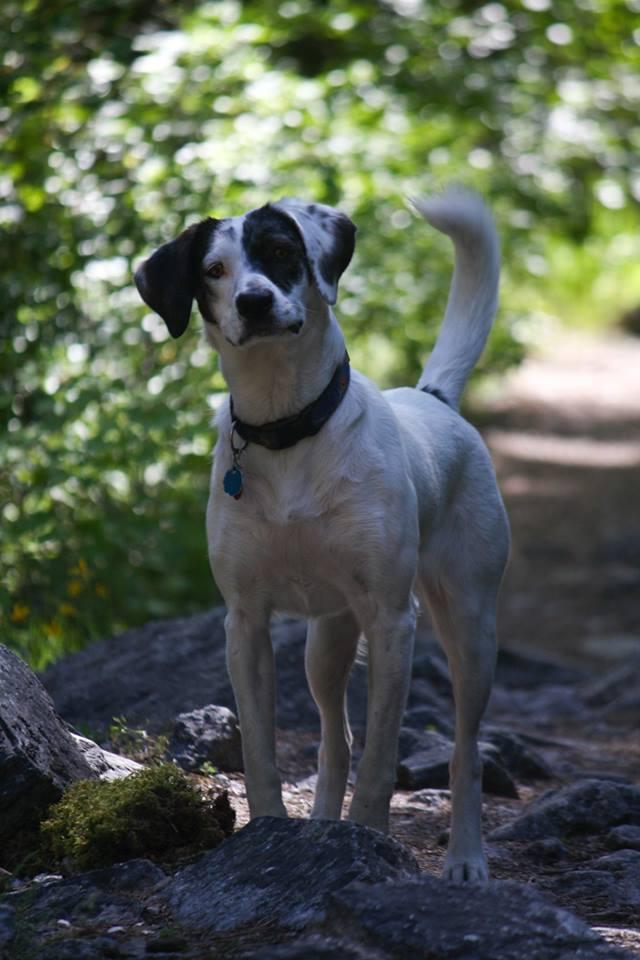 dogsweddingphotography