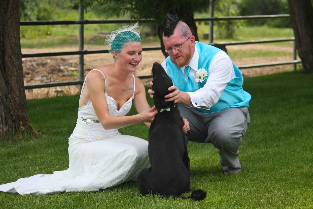 weddingdogsmissoulamt